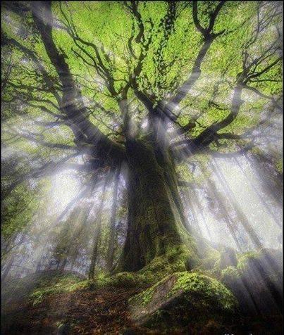 albero-10
