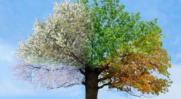 albero stagioniu | Roberta Pagliani - Yoga Consapevolezza e Gioia