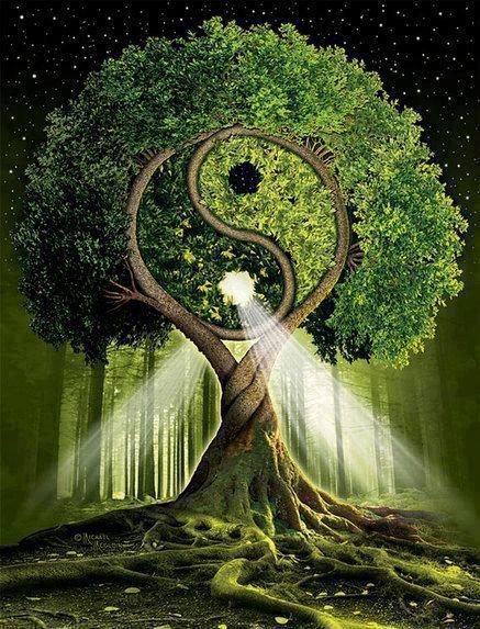 albero-tao