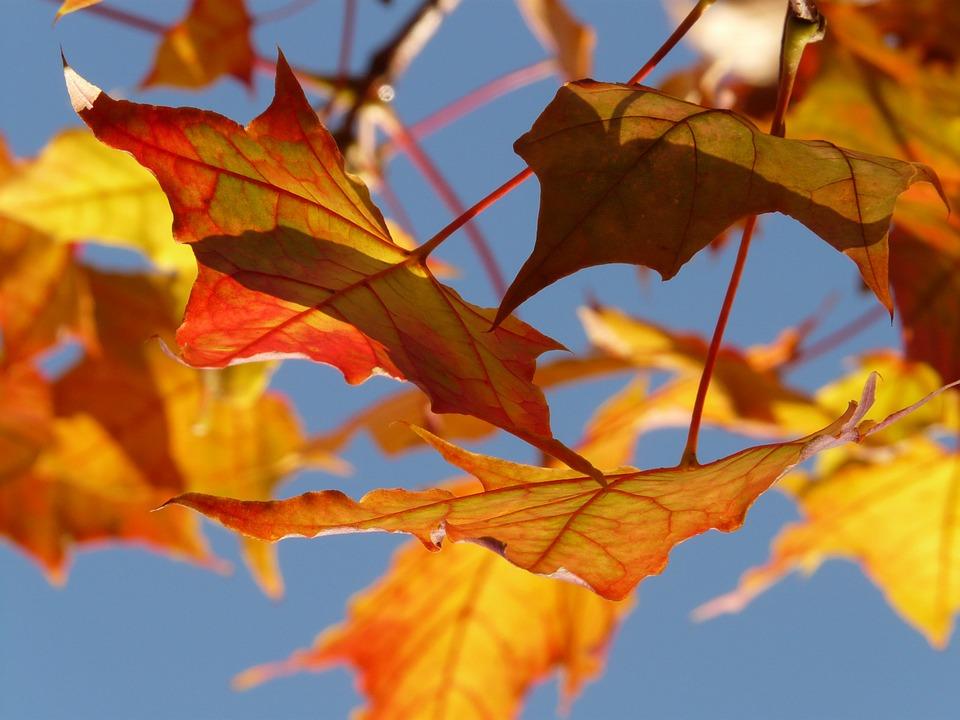 foglie cielo autunno 1